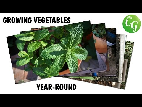 Gardening All Year Round - 5 Vegetables & Herbs To Grow All Year