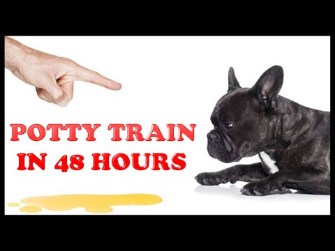 Potty train your puppy or dog easily in 48 hours - 3 simple steps.