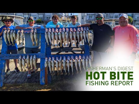 Lake Erie Walleyes, Lake Michigan Kings, & More - Hot Bite Fishing Report - June 21, 2020