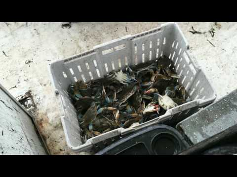 Blue Crab Fishing In Louisiana!