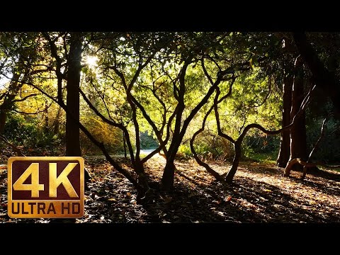 4K Relaxation Video - Autumn in Washington Park Arboretum, Seattle - episode-3 - Relaxing Music
