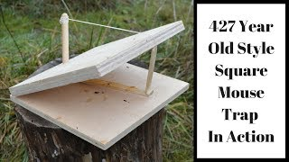 427 Year Old Style Square Mouse Trap In Action.