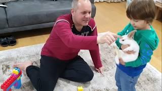 Fatih Selim tavşanı kafesten çıkardı legolarla oynasın,beraber oyun oynayıp tavşan evi yapalım