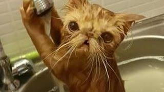 Кошки и вода!Смешные видео приколы! Не оторваться!