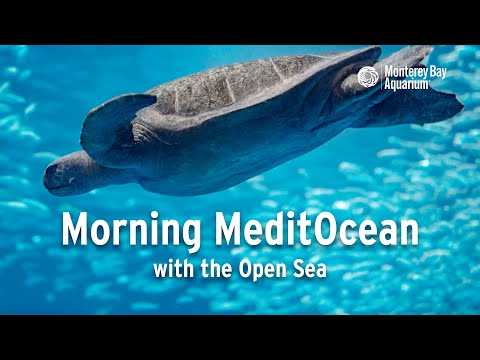 Morning MeditOcean — A Guided Meditation with the Open Sea