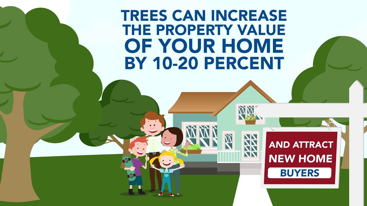 trees increase property value for your home if trimmed