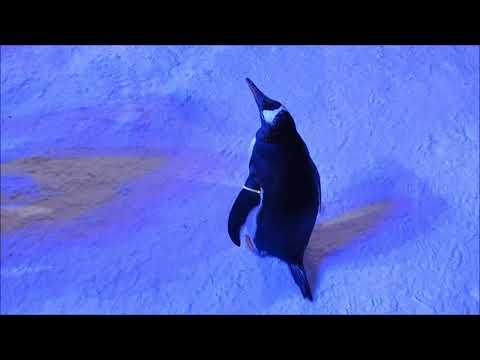 Emirates Mall Ski in Dubai And the Penguins Show