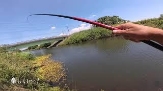 【のべ竿担いで】ちょろっとコイ釣り【桑納川】