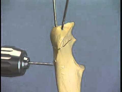 ortopedia veterinaria, veterinary orthopedics