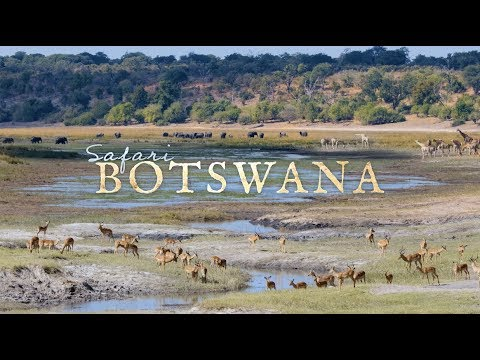 Safari Botswana | Time-Lapse Flow Motion - 4K