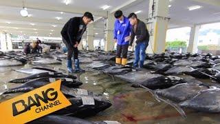 """""""อุ้ม-ว่าน"""" พาดูตลาดปลาและการประมูลปลา ที่ Katsuura Fishing Port"""