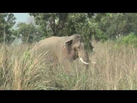 University of Puerto Rico - Mayaguez Safari to South Africa - 2013