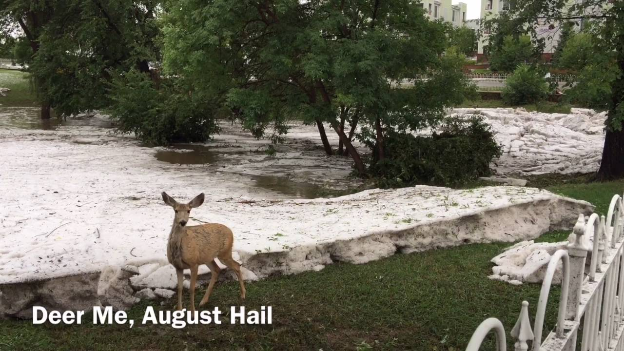 Deer me, check out this thick blanket of hail in Colorado Springs