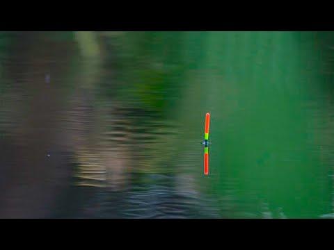 на что клюет уклейка в просто рыбалка