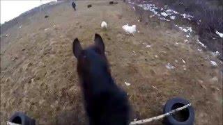 Собаки и конь