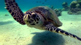 Madagascar (NosyBe).13 Ottobre 2016.Immersione a Tanikely Acquario