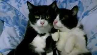 חתולנובלה פרק 3