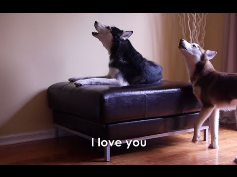 2 TALKING DOGS ARGUE - SUBTITLED! Mishka & Laika