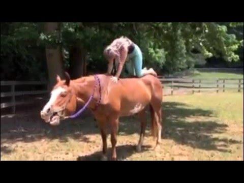 cat/ cow on horseback bareback yoga  youtube