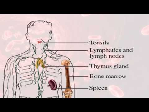 Rh Negative Blood & Hypothyroidism
