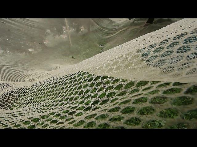 La raccolta delle olive a Marone.