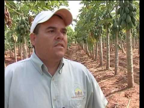MaximsNewsNetwork: BELIZE: PESTFREE EXPORTS