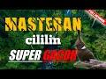 Masteran Cililin Super Gacor Suara Jernih Full Tembakan  Mp3 - Mp4 Download
