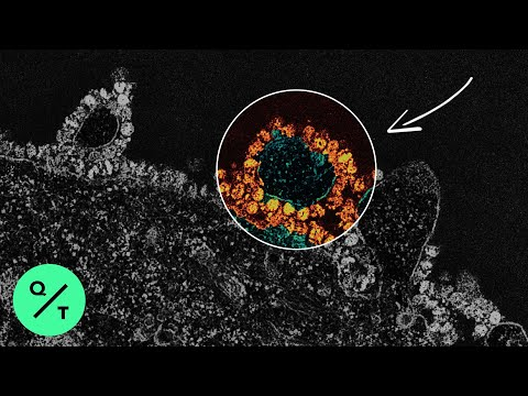 How The Coronavirus Hijacks Your Cells