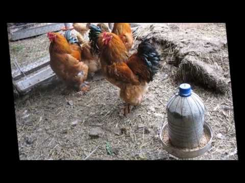 Кормушки для птиц и скворечники своими руками фото идеи