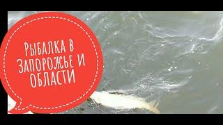 САЗАН ПОШЁЛ.Рыбалка в Запорожье. Порт Ленина,Набережная, ставки: Долинское, Григорьевка.