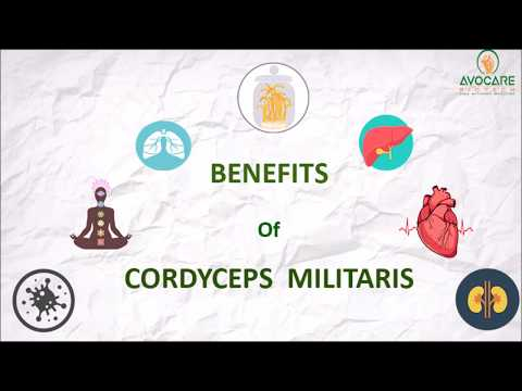 benefits-of-cordyceps-militaris-by-avocare-biotech