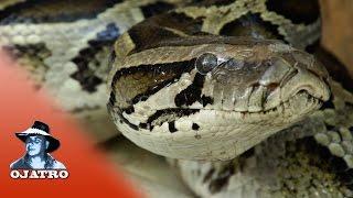 Python vs Turtle 01 Narration