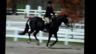 Branch Hill Farms Cincinnati Ohio- Sale Horse Notorious 2