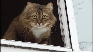 домашний кот в окне дывиццо миру