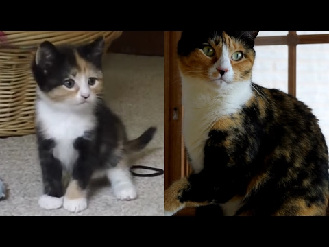 Kittens Growing Up Time Lapse: 5 Years In 5 Minutes