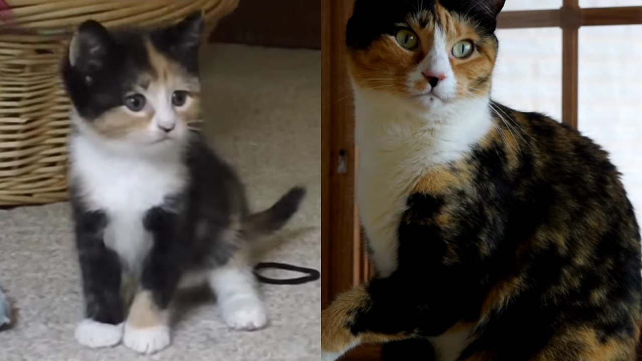 When Does A Cat Stop Growing Best Cat And Kitten Image And