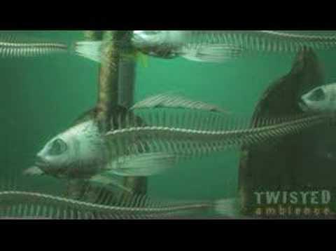 Dead Fish Swimming Youtube