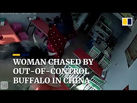 Woman chased by out-of-control buffalo in China