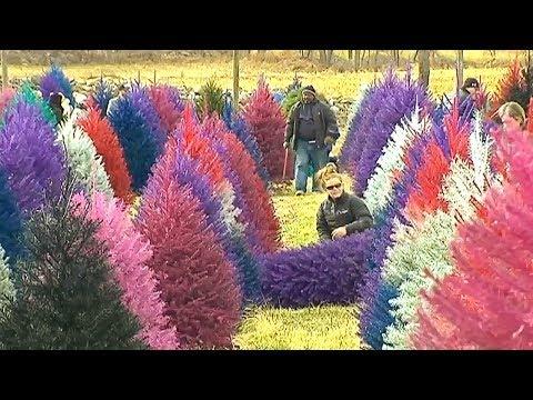 This Farm Sells Colorful Christmas Trees 🎄