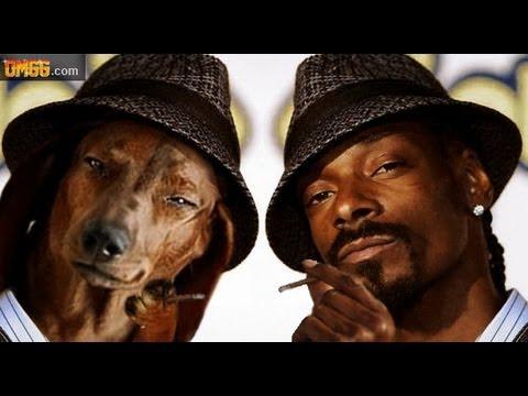 Dogs Who Look Like Celebrities