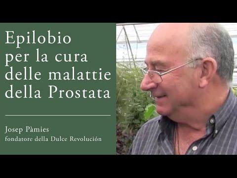 epilobio e malattie della prostata