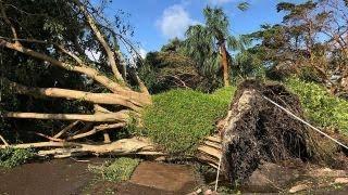 Hurricane Irma rips down trees in Naples, Florida