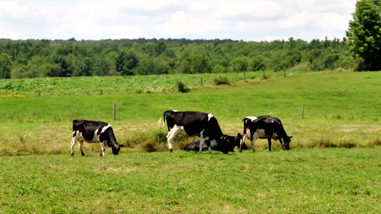 production cornell small farms program - 1280×720