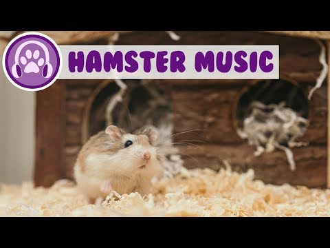 Music for Hamsters - Relaxing Sleep Music for Anxious Rodents