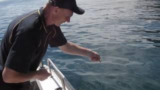 Рыбалка в Австралии (кальмары)(Рыбалка в Южной Австралии.Мой первый кальмар на креветку., 2016-05-10T18:20:46.000Z)