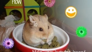 10 ways to make your hamster happy!
