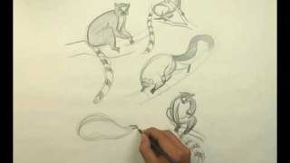 Drawing-How to draw Lemurs-preview.flv