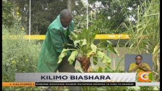 SMART FARM | Sugar Beet Farming
