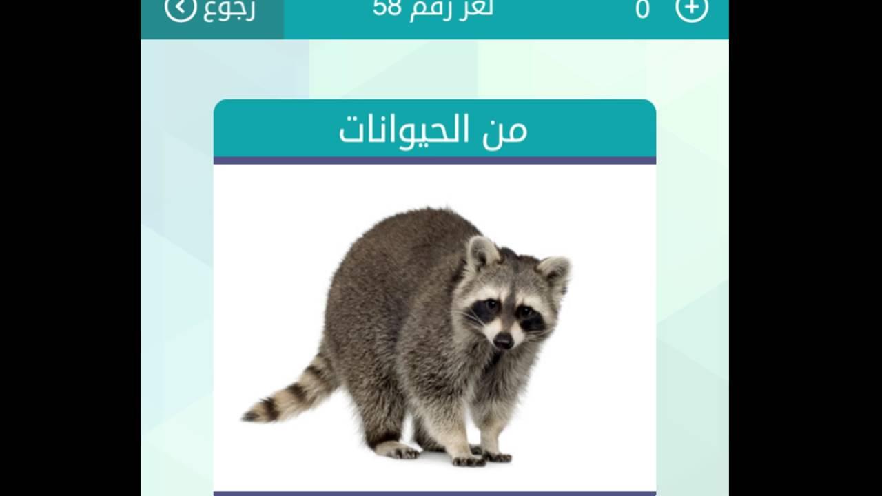 جواب لغز من الحيوانات كلمات متقاطعة وصله
