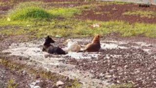Funny Animals - Relaxation Corner